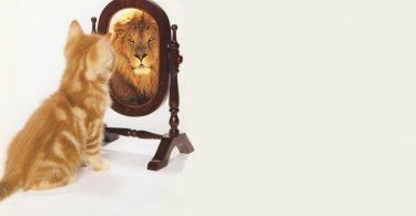 Что лучше: высокая самооценка или собственное достоинство?