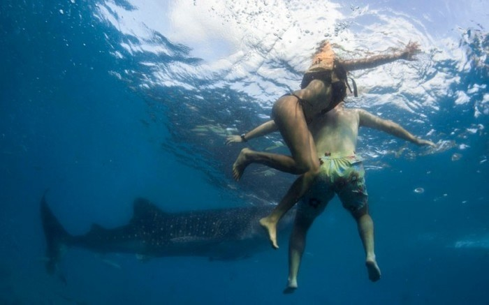 Акула одиночка оттяпала НОГУ туристу в Крыму (+18)