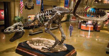 Топ странных и необычных музеев мира: видео