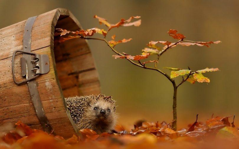 10 причин полюбить осень