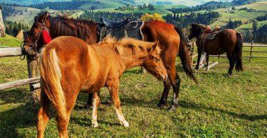 Прогулка на лошадях: в поисках новых эмоций
