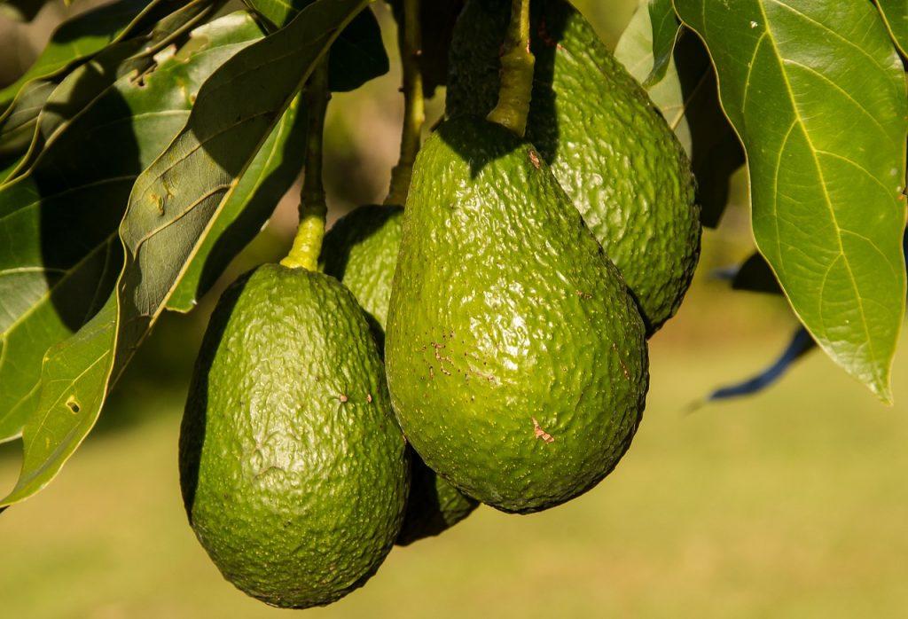 Основные вопросы и ответы про авокадо