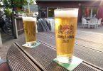Пиво: классификация и полезные свойства