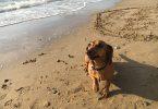 Пробежка с собакой: как разнообразить свой досуг?