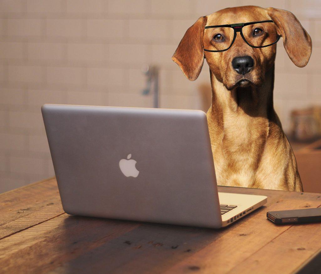 Прикольные картинки животные на работе, открыток новому